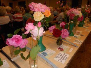 roseshow17k